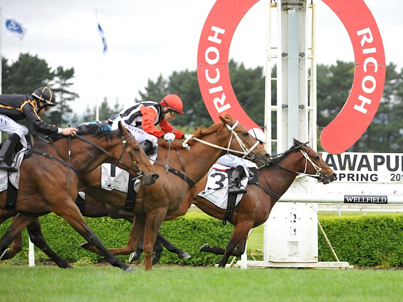 Father Lenihan, rails, staves off a late challenge by One Prize One Goal to score at Awapuni. PHOTO: Race Images.
