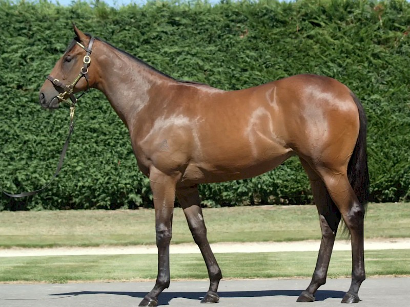 How Princess Amelie looked as a yearling when she fetched $300,000.