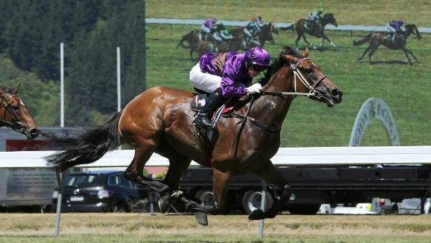 Platinum Witness won four races in the season including the Group I 1000 Guineas at Riccarton