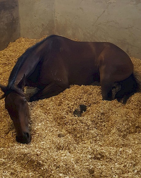 Lie down time … Saint Lincoln resting in his box today. PHOTO: Scott Bailey.