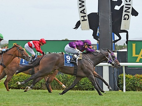 Miss Oahu photofinishes Sophia Magia at Hastings in March. PHOTO: Race Images.