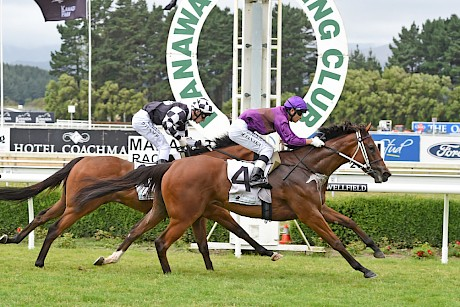 Lincoln's Gal beats Malo Bik at Awapuni on Boxing Day last year. PHOTO: Race Images.