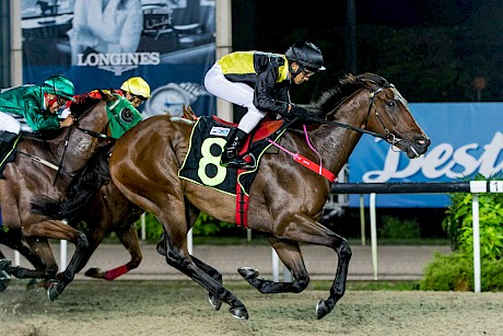 Saint Lincoln powers home to score fresh-up at Kranji. PHOTO: SGRacing.