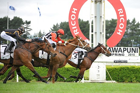 Father Lenihan in winning form at Awapuni. He gets weight relief on Saturday but must have the fire out of the ground to start.