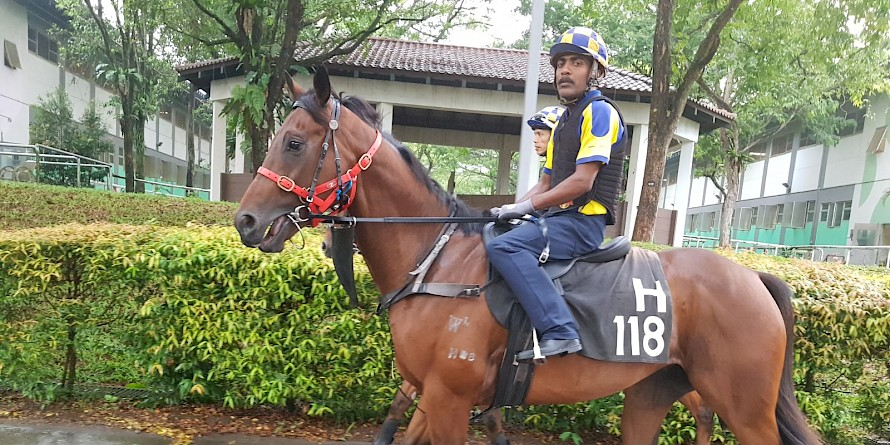 Lucky Enough … wide barrier draw makes it very hard for him at Kranji tonight.