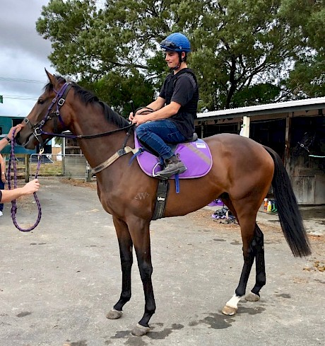 Platinum Road is much improved for his unlucky run at Taupo.