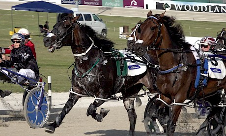 Line Up, centre, charges out of the gate at Auckland in the Sales Series Final at Auckland.