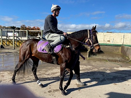 Shaun Fannin goes out today on impressive Levin jumpout winner Platinum Rapper.